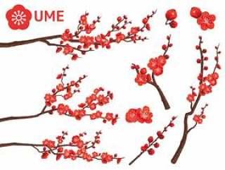 切掉新年梅花红梅的分枝03