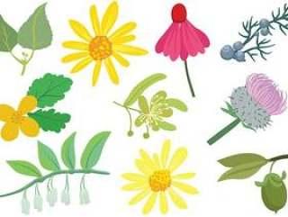 化妆品植物载体