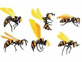 孤立在白色背景上的巨型黄蜂的集