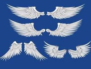 白色的翅膀插图