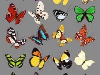 20只蝴蝶psd图片素材