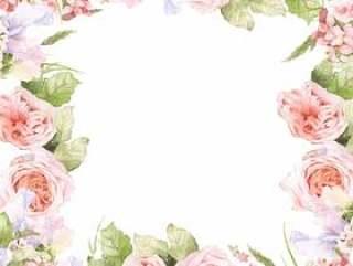 三文鱼粉红色的玫瑰花框架