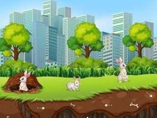 兔子上面和地下