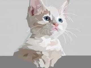 可爱的猫咪等待