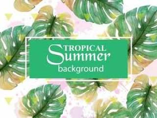 夏季热带棕榈叶