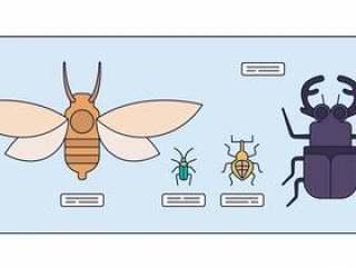 昆虫学矢量