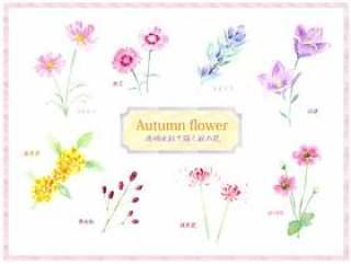 秋花设置绘图与透明的水彩