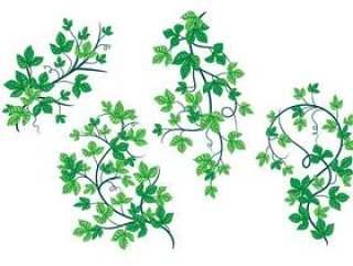 投标绿色的毒藤叶植物载体的叶子