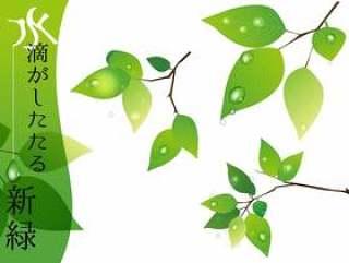 新鲜的绿色与滴水滴
