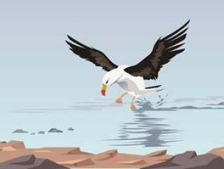 在海上传染媒介的飞行的信天翁