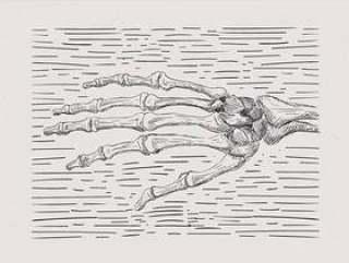 手绘骨架手图