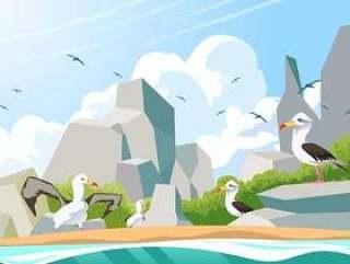 在多岩石的海滩传染媒介的信天翁鸟