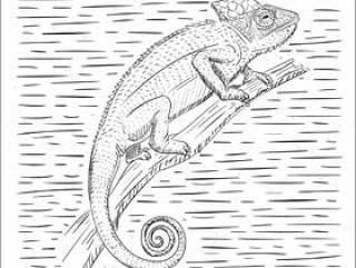 手绘矢量Cameleon插图