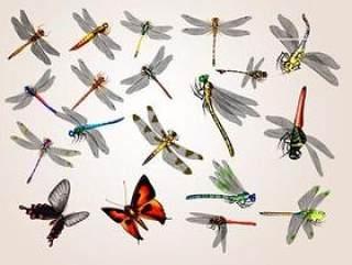 20只蜻蜓与蝴蝶psd素材