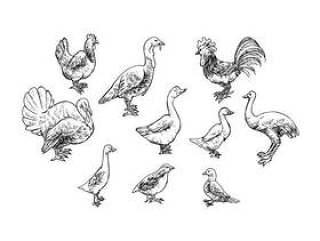 家禽素描图标矢量