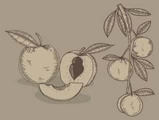 桃手绘制的插图矢量