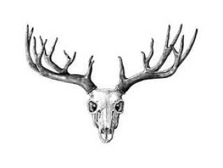 在白色背景隔绝的手拉的鹿角