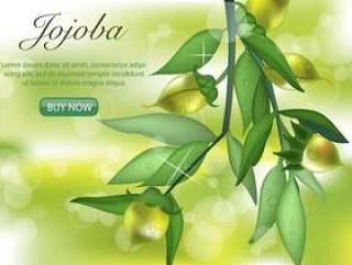 绿荷荷巴植物