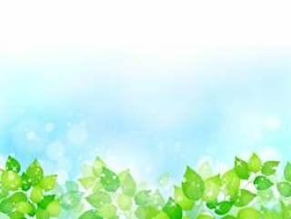 新鲜的绿色268
