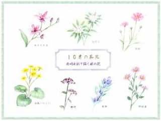 秋天的花朵画着透明的水彩 - 十月的棕色的花朵