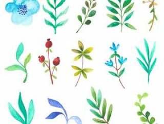 水彩花卉和分支机构