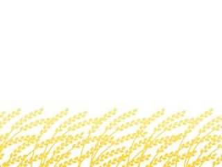 水稻背景材料2