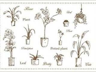 植物叶子手绘叶集