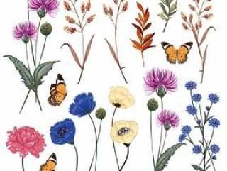 植物的草甸花传染媒介例证