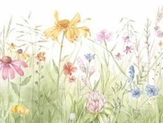 春天的田野,小花朵的天堂