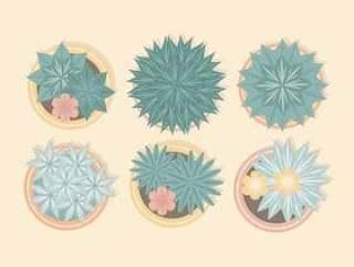 从盆的植物上的传染媒介