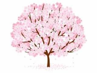 樱桃树材料116