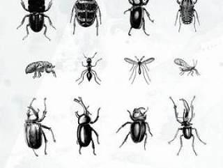 20款昆虫剪影矢量素材下载