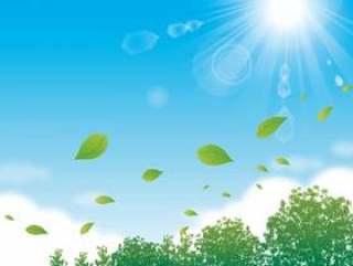 树叶和阳光在树叶背后跳舞的天空