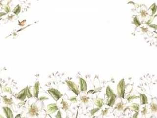 花框架289 - 白色圣诞节玫瑰色背景