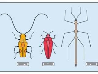昆虫集合矢量