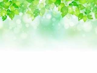 新鲜的绿色267