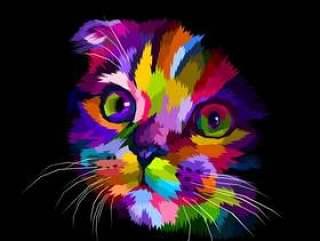 苏格兰折耳猫的头在黑暗中色彩斑斓