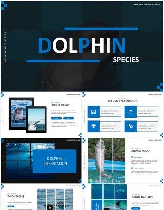 简约蓝色海豚宣传介绍PPT模板Dolphine Species Templates